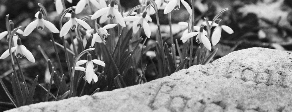 kwiaty-pogrzeb-lodz-pabianice-zgierz